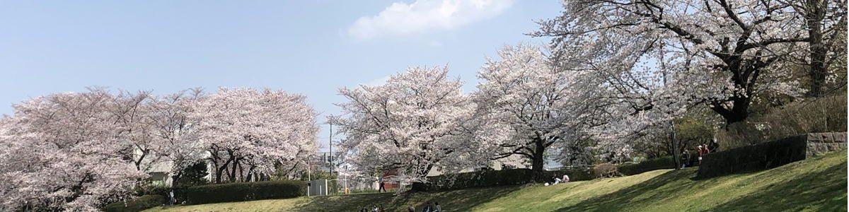 春の大宮公園2021